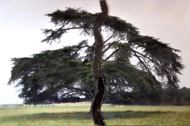 Miryan KLEIN, Série Métamorphose, Le Cèdre du Liban, 2015, photo sur toile, résine, 1m50 x 1m50